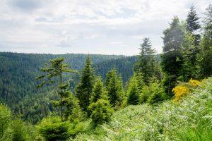 Enzmarathon - Mit dem Mountainbike durch das Enztal_13